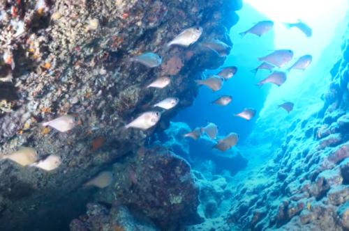 Üçgen Balığı